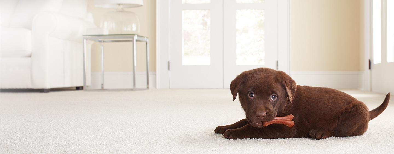 Carpet: Carpet Samples, Carpeting & Carpet Tiles at The Home Depot