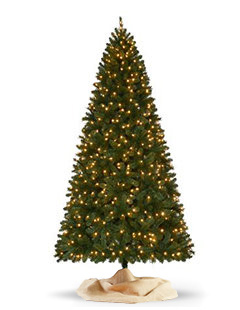 over 75 feet - Christmas Trees With Colored Lights Decorating Ideas