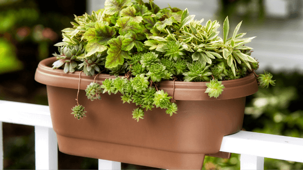 Planters - Oopes on post planters home depot, patio planters home depot, brick planters home depot, plant pots home depot, vertical garden home depot, window planters home depot, trellis planters home depot,