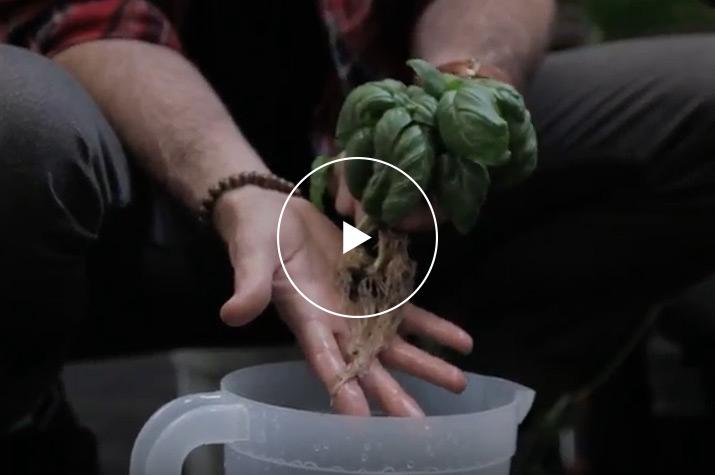 fetching home depot garden hose reel. Hydroponics Video Hydroponic Gardening at The Home Depot  Fetching Garden Carts Design Plan