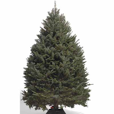 Types of Real Christmas Trees - The Home Depot