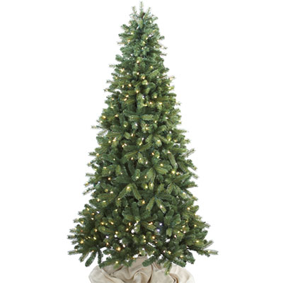 colorado live christmas trees colorado blue spruce - Christmas Tree Blue