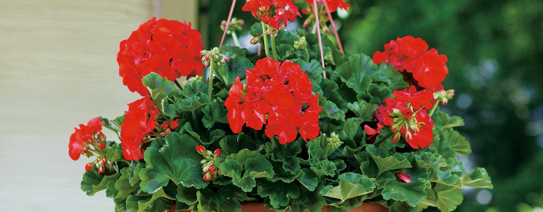 Types of annuals izmirmasajfo