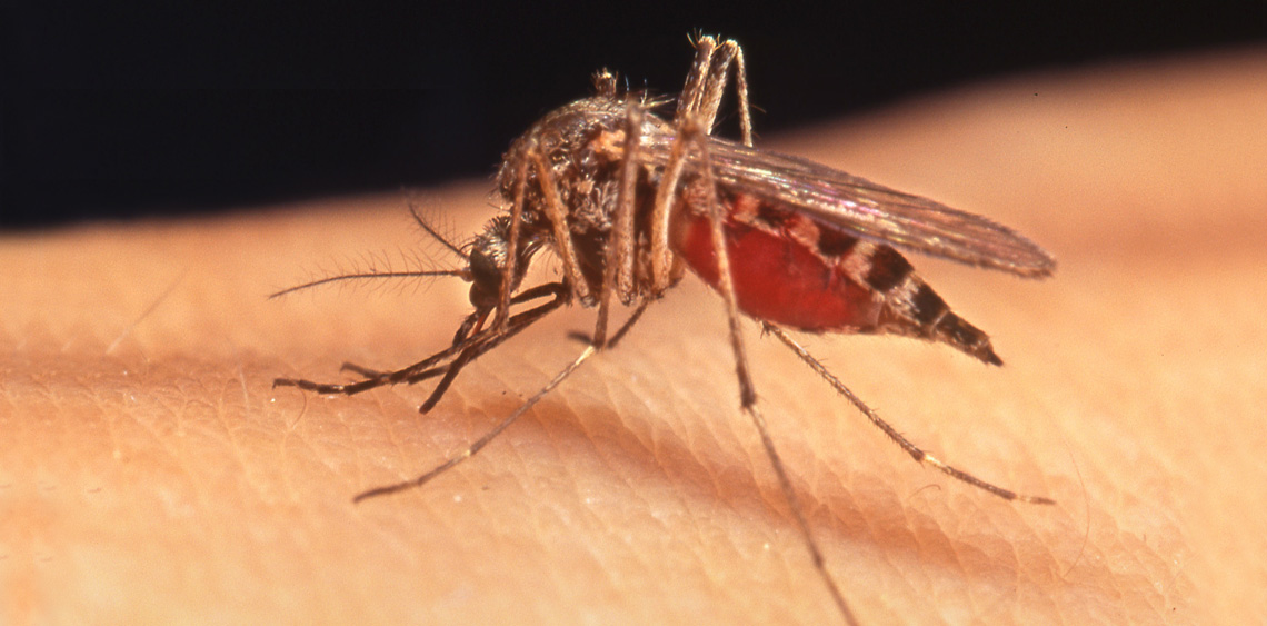 Learn The Best Methods To Eliminate And Prevent Mosquitoes