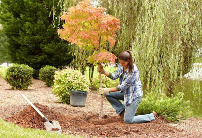 Fall Is The Best Time To Plant Trees And Shrubs Around Your Home