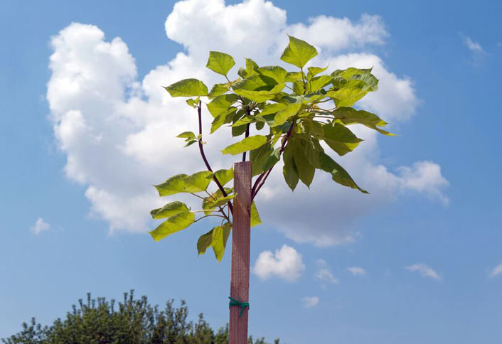 Learn Steps to Stake a Tree at The Home Depot