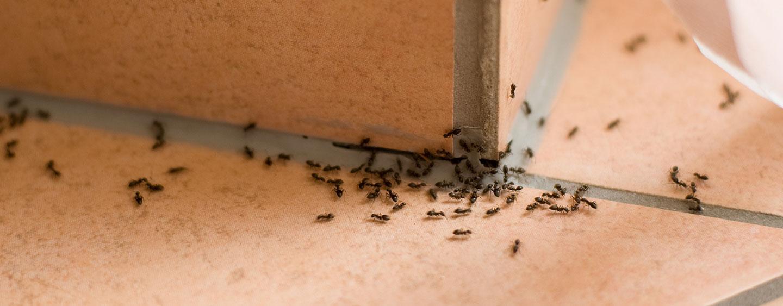 Image result for inside house pests