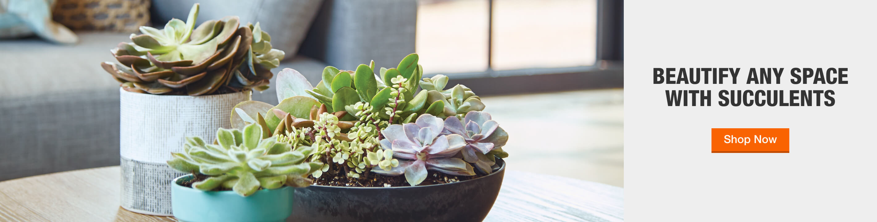 BEAUTIFY ANY SPACE­ WITH SUCCULENTS