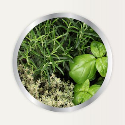 Alaska Fertilizer vegetable and herb gardens