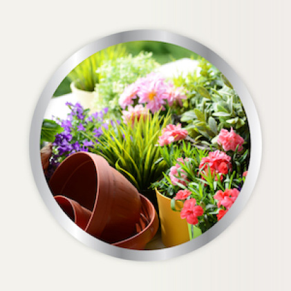 Alaska Fertilizer use for container plants