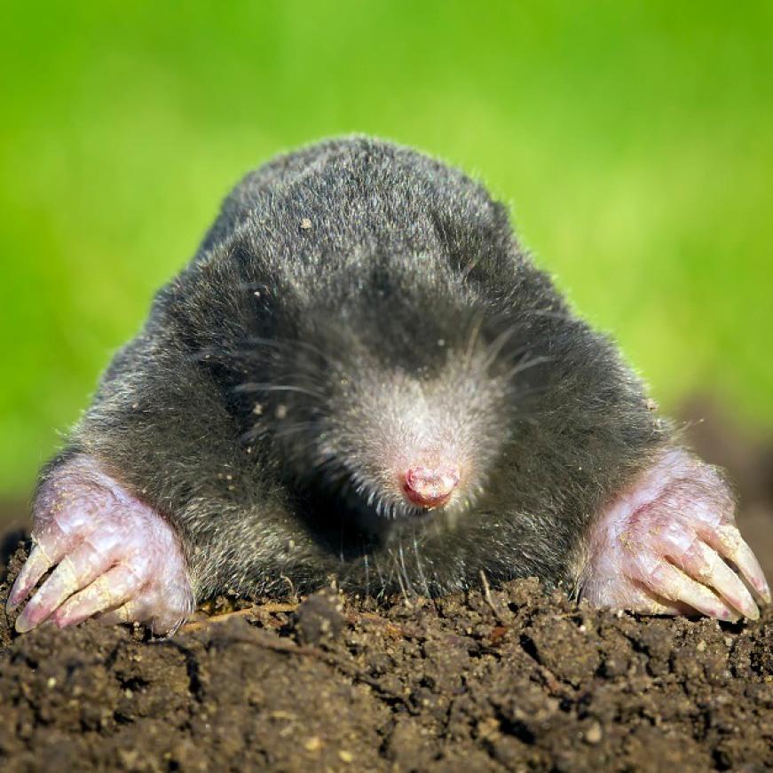 Have a hole? Could be a Mole