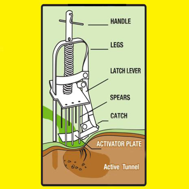 Where to Place Your Mole Trap