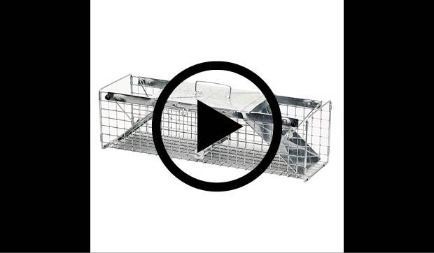 havahart medium 2 door animal cage trap 1030 the home depot rh homedepot com