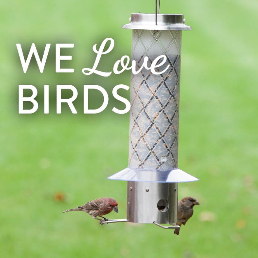 we love birds, squirrel resistant seed feeders