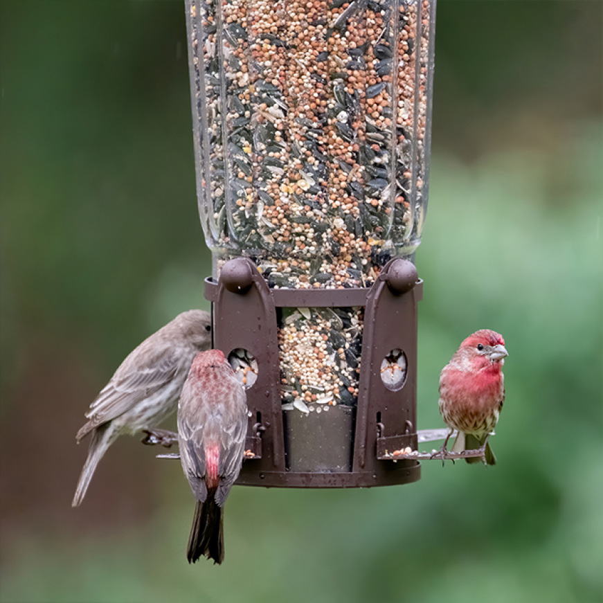 multiple ports, squirrel resistant seed feeders