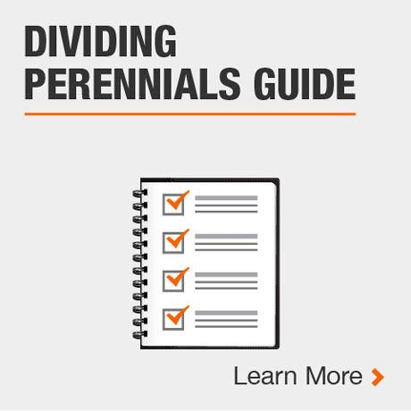 Dividing Perennials Guide