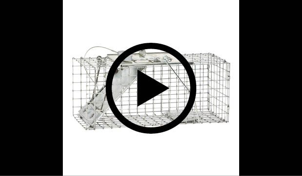 havahart small easy set live animal cage trap 1083 the home depot rh homedepot com