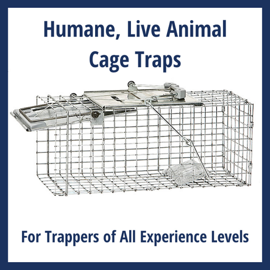 Traps for All Experience Levels