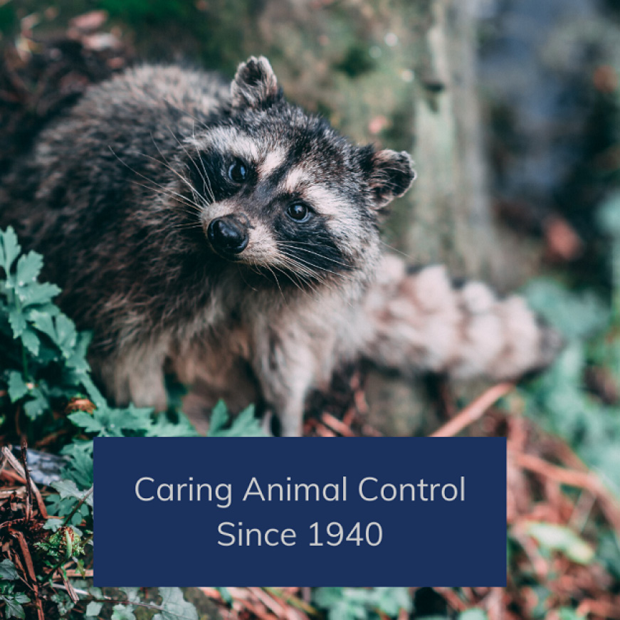 Caring about Animal Control since 1940