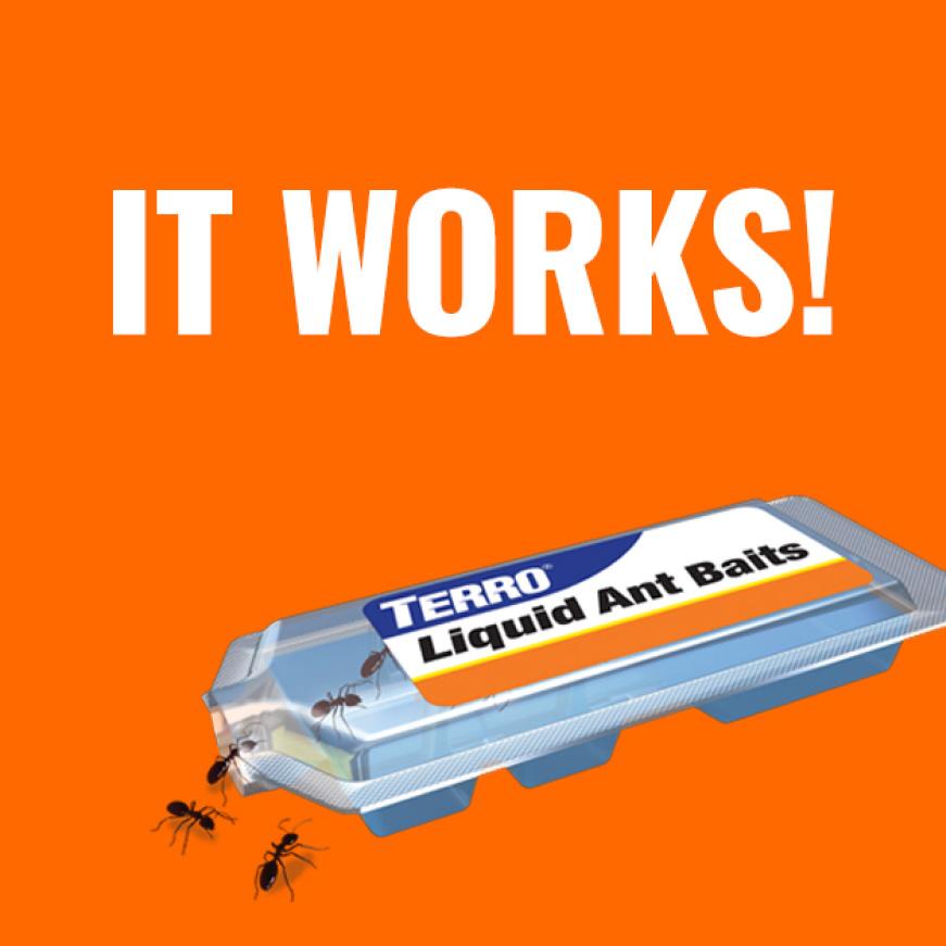 it works, liquid ant bait
