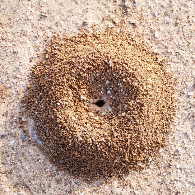 total population control, liquid ant bait