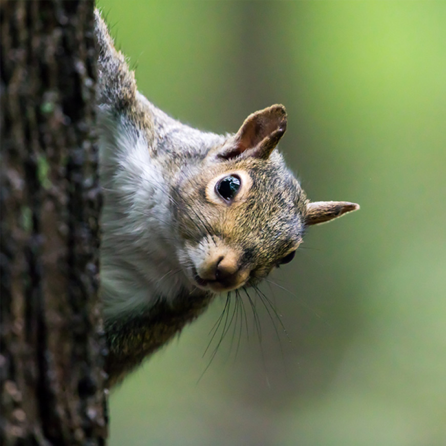 feed birds not squirrels, squirrel resistant seed feeders