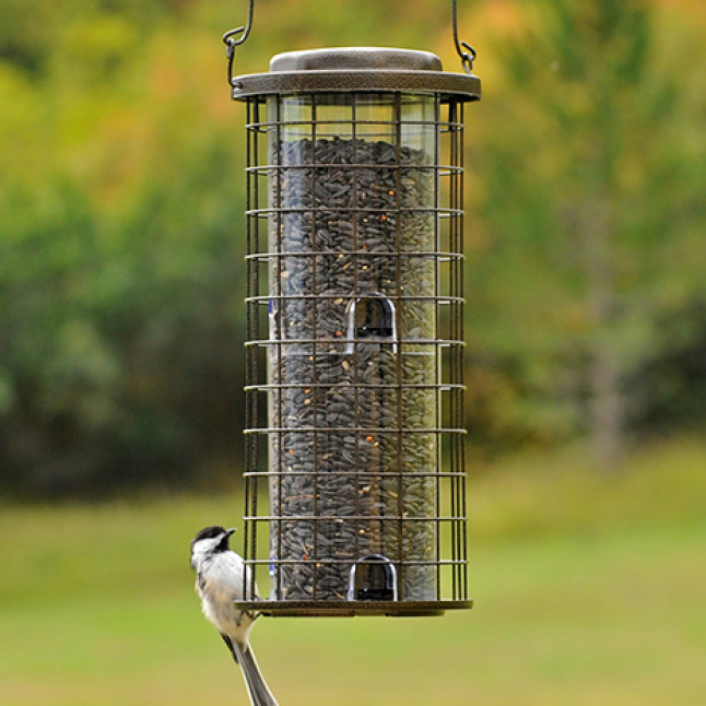 metal feeder accents, squirrel resistant seed feeders