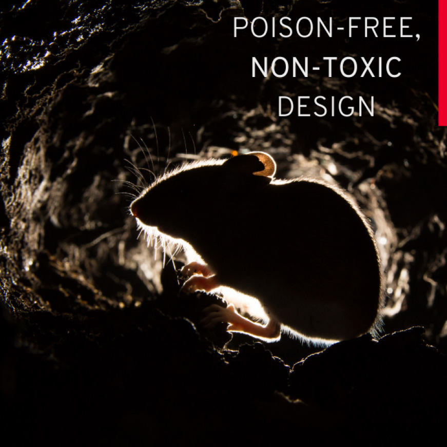 Non-Toxic and Poison Free Trap