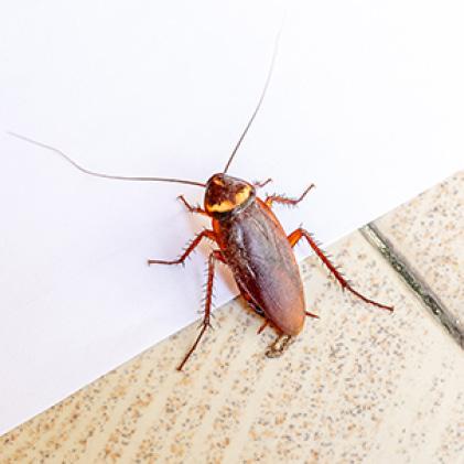 Terro 3 Lb Outdoor Ant Killer Granules Plus Shaker Bag T901 6 The Home Depot