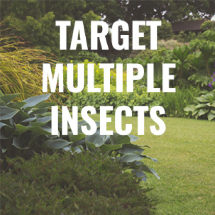 target many insects, outdoor ant killer