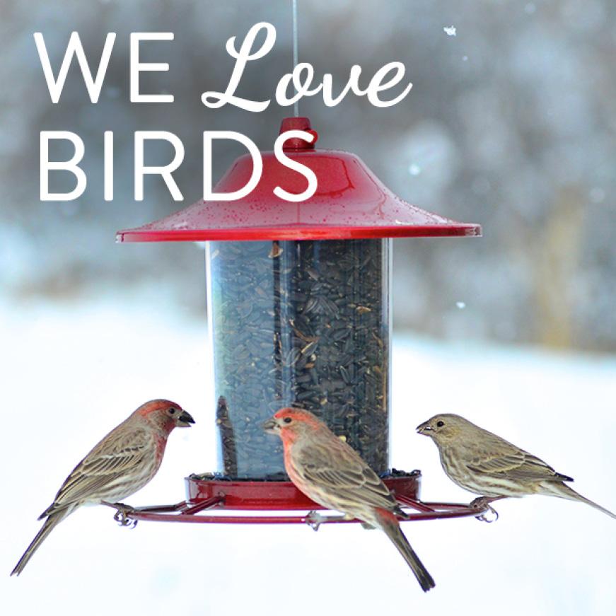 we love birds, sure-lock lid seed feeders
