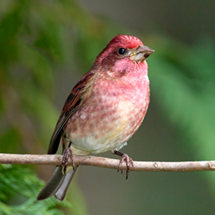 finches, sure lock lid seed feeders