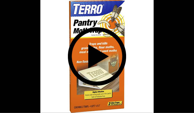 Terro Pantry Moth Trap T2900 The Home Depot