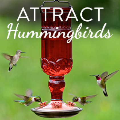 attract hummingbirds, decorative glass hummingbird feeders