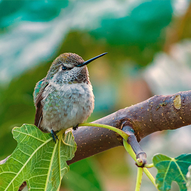 where to place hummingbird feeders, decorative glass hummingbird feeders