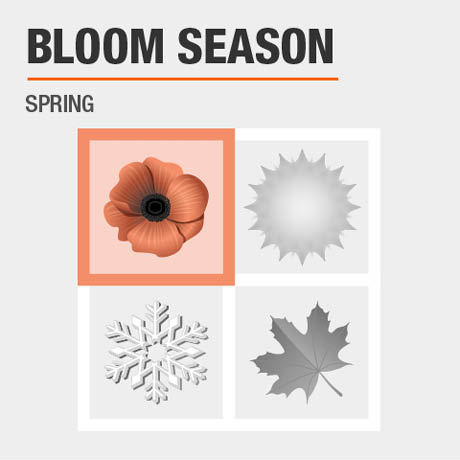Bloom Season | Spring to Fall