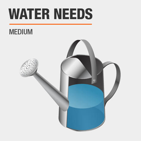 Water Needs
