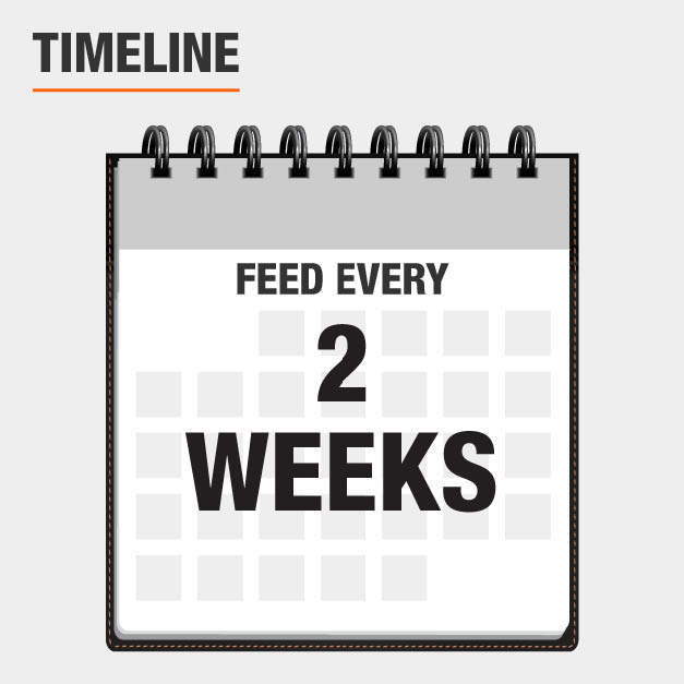 Feeds for 2 weeks