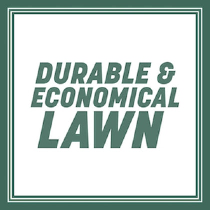 Durable and economical Lawn