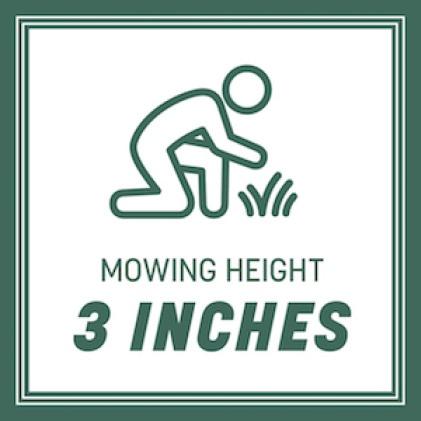 Mow when grass reaches 3 inches
