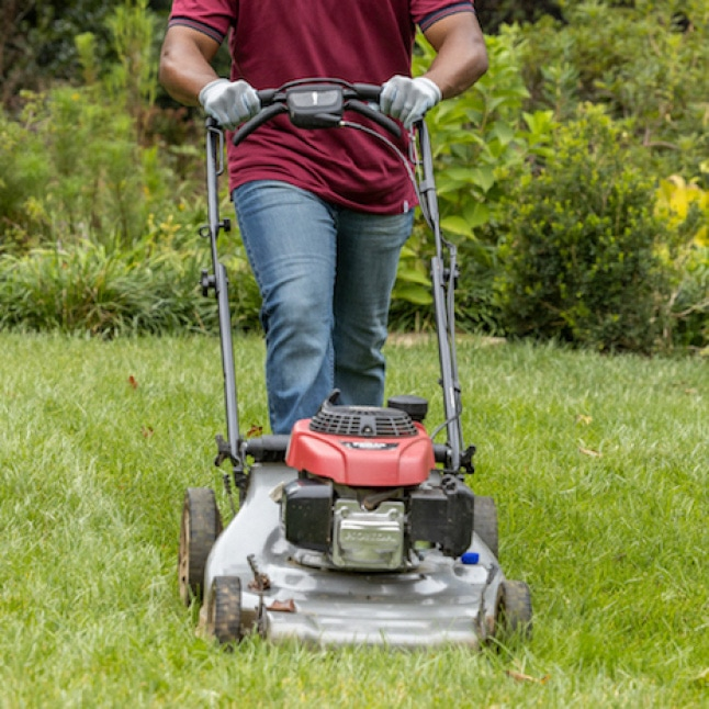 Lawn mowing photo