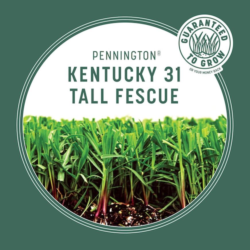 Pennington Kentucky 31 Tall Fescue, guaranteed to grow