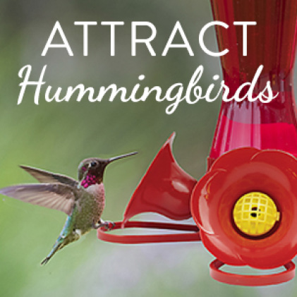 attract hummingbirds, glass hummingbird feeders