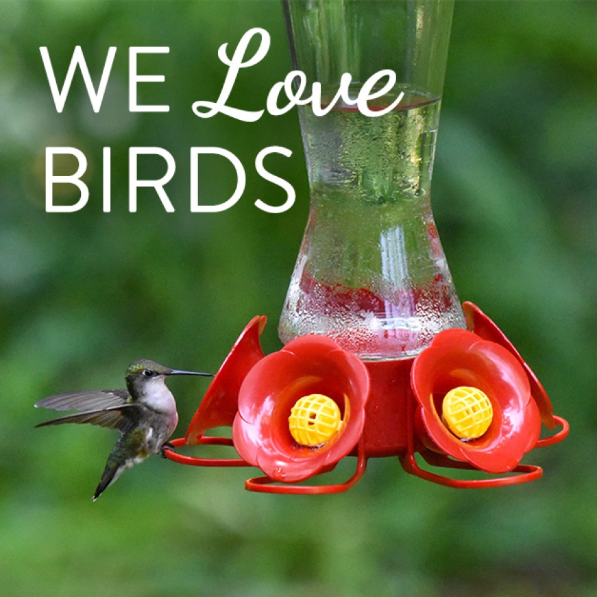 we love birds, glass hummingbird feeders