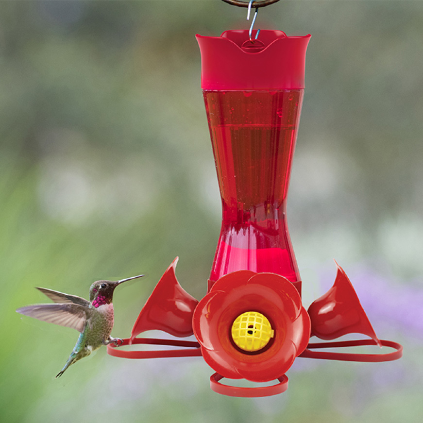 iconic hummingbird feeders, glass hummingbird feeders