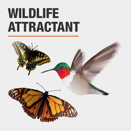 Wild Life Attractant