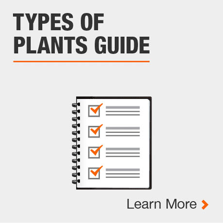 Type of Plants Guide