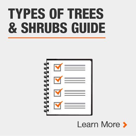 Type of Trees & Shrubs Guide