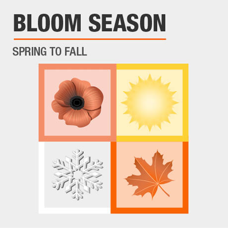 Bloom Season | Spring to Fall
