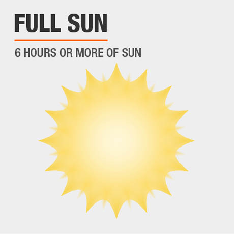Full Sun | 6 hours or more of sun